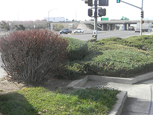 commercial shrub bush trimming