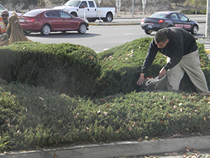 pruning bush trimming